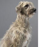dog-blog-mossup-150x160